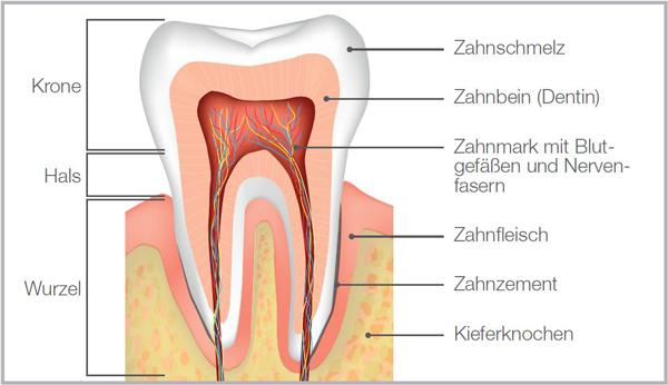 Natürliche Zahnpflege LOGODENT - Bio & Vegan   LOGONA Naturkosmetik